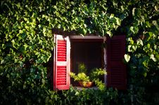 Free Red Window In An Ivy Covered Wall Stock Photos - 20836123