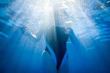 Free Swimmer In The Light Stock Photo - 20836210