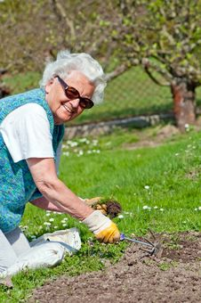 Free Senior Woman In Garden Stock Photos - 20836393