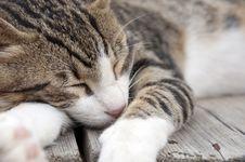 Free The Cat Dozing Royalty Free Stock Photos - 20836568