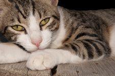 Free Cat S Eyes Royalty Free Stock Photos - 20836588