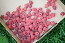 Free Fresh Raspberries Royalty Free Stock Photos - 20836698