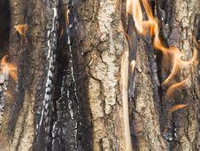Free Firewood Burning Royalty Free Stock Images - 20837379