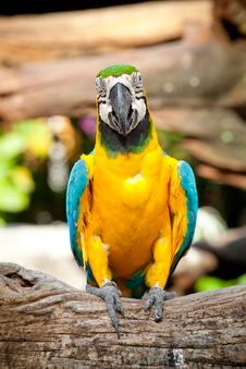 Free Colorful Macaw Stock Photos - 20838553