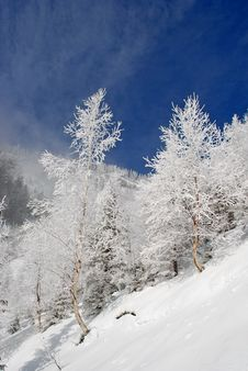 Free Winter On A Hillside Stock Photography - 20838622