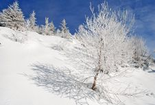 Free Winter On A Hillside Royalty Free Stock Image - 20838626