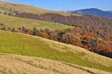 Free Autumn On A Hillside Stock Photos - 20838643