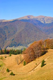 Autumn On A Hillside Stock Photo