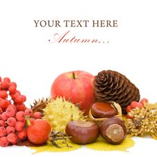 Free Autumn Leaves And Fruits Royalty Free Stock Image - 20838676
