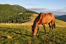 Free Horse On A Summer Mountain Pasture Royalty Free Stock Images - 20838749