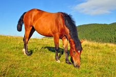 Free Horse On A Summer Mountain Pasture Stock Image - 20838761
