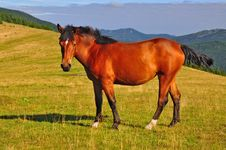 Free Horse On A Summer Mountain Pasture Royalty Free Stock Photo - 20838785