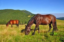 Free Horses On A Summer Mountain Pasture Royalty Free Stock Photo - 20838795