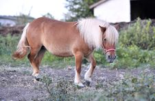 Free Beautiful Pony Royalty Free Stock Image - 20839276