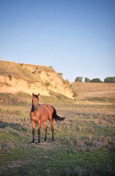 Free Beautiful Horse Royalty Free Stock Photos - 20839288
