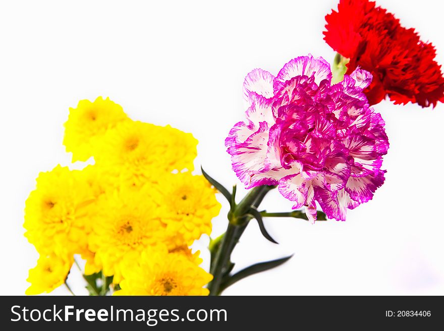 Colorful flower isolate on white