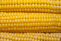 Free Corn Royalty Free Stock Photography - 20840107