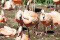 Free Flamingo Stock Images - 20840354