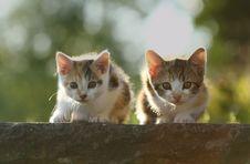 Free Small Predators Stock Photography - 20840752
