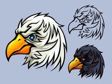 Free Bald Eagle Head Royalty Free Stock Photography - 20840757