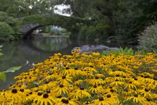 Free Central Park At Gapstow Bridge Stock Image - 20840821