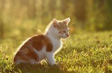 Free Cat Stock Image - 20840891