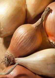 Free Raw Baby Onions Stock Image - 20843261