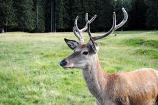 Free Horny Male Deer  In Mountain Landscape Stock Photos - 20843333