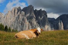 Free Brown Cow Rests In The Grass With Alps Background Royalty Free Stock Photos - 20843368