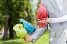 Free Wedding Pigeons In The Hands Royalty Free Stock Images - 20843409