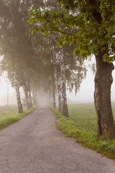 Free Morning Mist And Road Stock Photo - 20843430