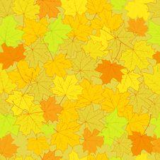 Free Autumn Royalty Free Stock Image - 20843526