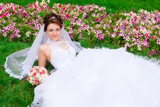 Free Portrait Of A Beautiful Bride Royalty Free Stock Images - 20843699