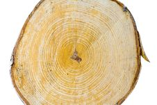 Free Cut Of A Birch Stock Photography - 20846942