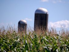 Free Corn Feild With Two Silos Stock Photography - 20847502
