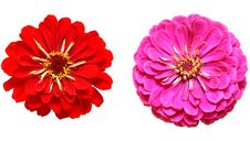 Free Beautiful Two Flowers Royalty Free Stock Photo - 20849455