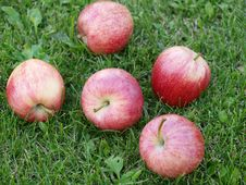 Free Apples In The Grass Royalty Free Stock Photo - 20849675