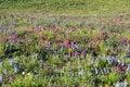 Free Flower Field Royalty Free Stock Photos - 20853508