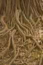 Free Tree With Roots Stock Image - 20853671