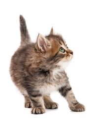 Free Cute Kitten Stock Photo - 20850140