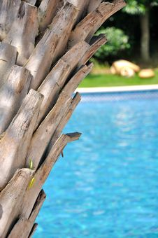 Free Palm Tree And Swimming Pool Royalty Free Stock Photo - 20851785