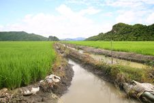 Free Rice Mountains Stock Photography - 20852312