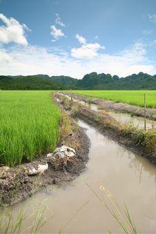 Free Rice On Sky Royalty Free Stock Photos - 20852318