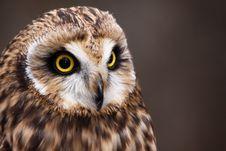 Free Beautiful Short-eared Owl Perching Stock Photography - 20852462