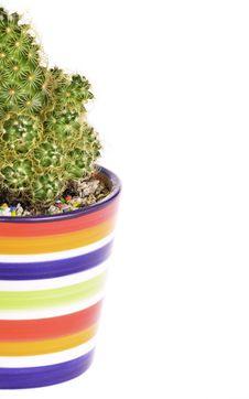 Free Cactus In Rainbow Pot Royalty Free Stock Photos - 20853668