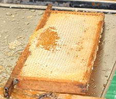 Free Honeycomb Tray. Stock Photos - 20853823