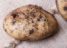 Free Potatoes Stock Photography - 20853842
