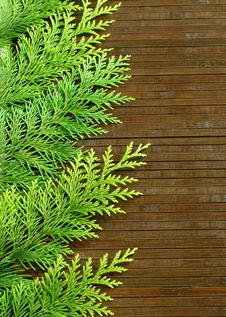 Free Branches Of A Fir-tree On Woden Stock Images - 20854044