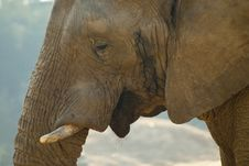 Free Close-up Shot Of An Elephant S Face Stock Photography - 20854832