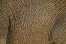Free Close-up Of An Elephant S Body Royalty Free Stock Photo - 20854835